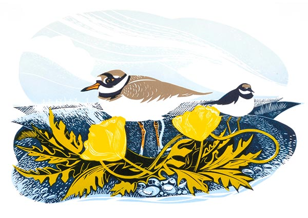 Ringed Plover (linocut), Greeting Card by Jeremy James - Thumbnail